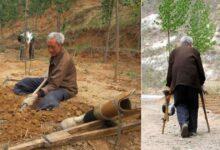 Photo of Un anziano disabile pianta alberi per 20 anni: con il suo encomiabile sacrificio ha dato vita ad una rigogliosa foresta di circa 17.000 alberi