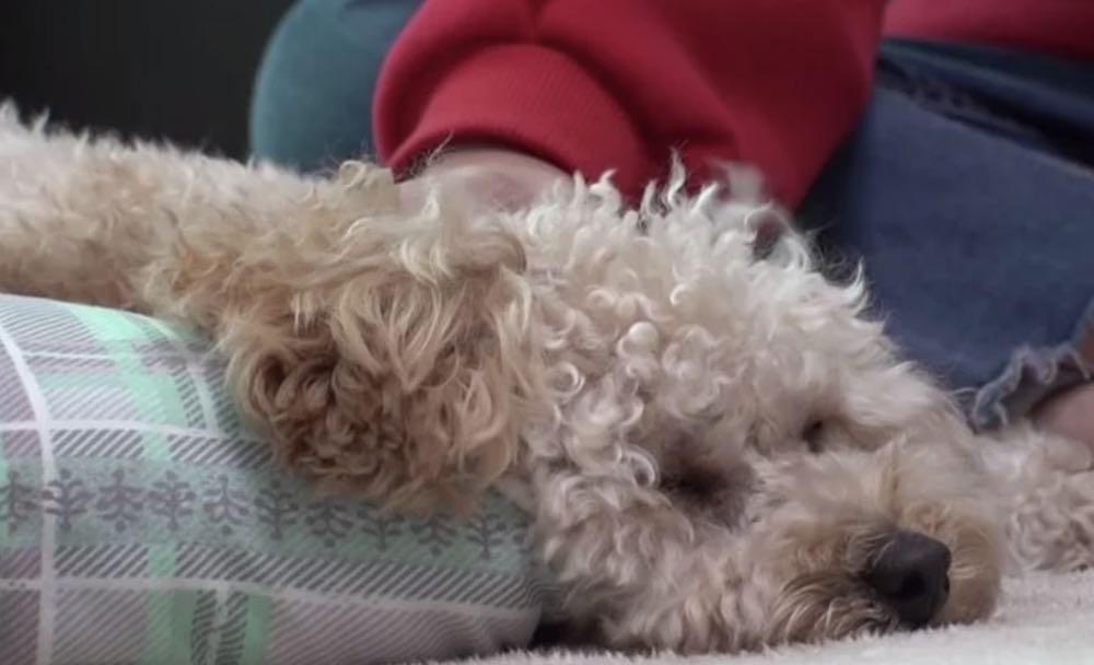 Un cucciolo traumatizzato dorme solo in piedi 3