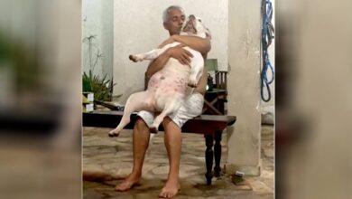 Photo of Non ha mai amato i cani, ma viene sorpreso a cantare abbracciato ad un pitbull: il video che riprende la scena diventa virale