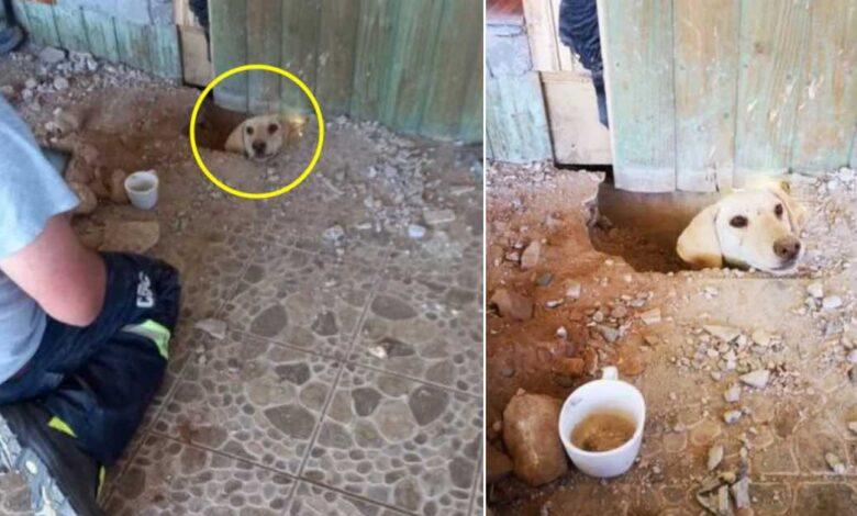 cane rimasto intrappolato per giorni