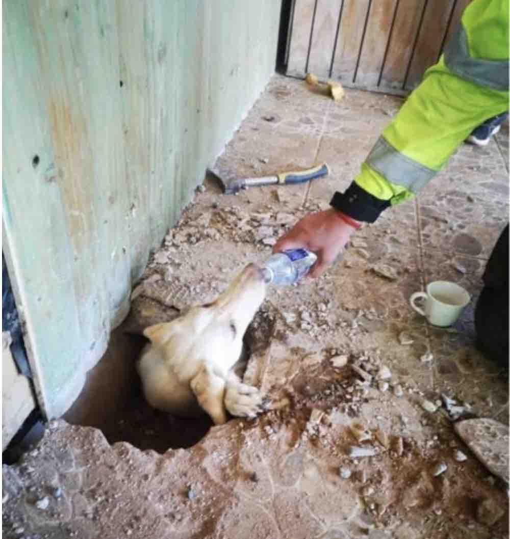 cane rimasto intrappolato