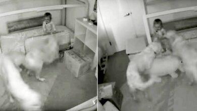 Photo of I cani aiutano la loro padroncina a fuggire dalla stanza per avere i croccantini: il video che riprende la scena rimbalza sui social e diventa virale