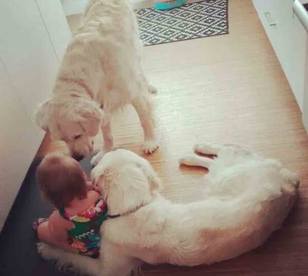 I cani aiutano padroncina