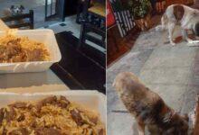 Photo of Il proprietario di un ristorante nutre i cani randagi con il cibo avanzato ed esorta i suoi colleghi a fare lo stesso: l'iniziativa viene applaudita dal web