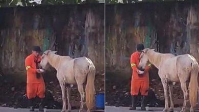 Photo of Un giovane netturbino interrompe il lavoro per aiutare un cavallo ammalato in mezzo alla strada: il video che riprende la sua generosità fa il pieno di visualizzazioni