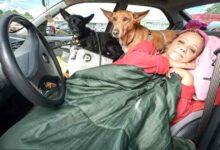 Photo of Una donna di 57 anni vive in macchina per non abbandonare i suoi cani: la sua storia tocca il cuore di tutto il web